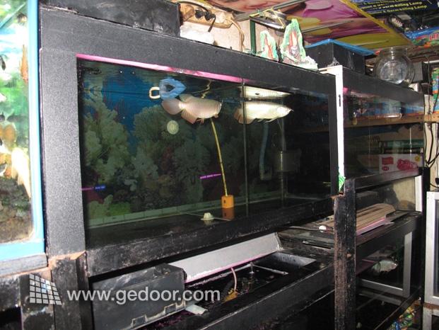 Aksesoris Akuarium Di Pasar Ikan Jatinegara