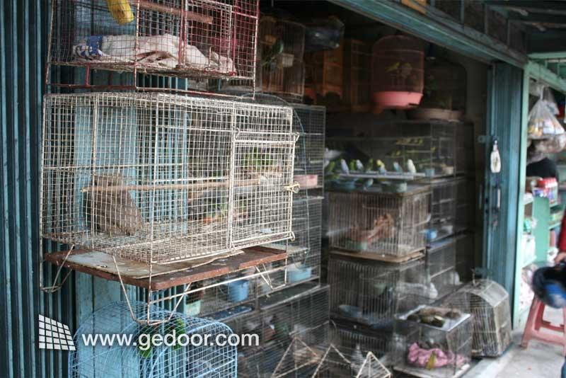 Aneka Burung di Jalan Barito