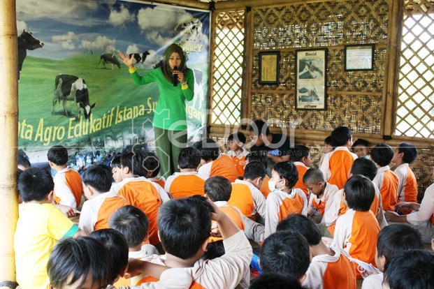 Cibugary  Wahana Edukasi Berkonsep Peternakan Sapi Perah