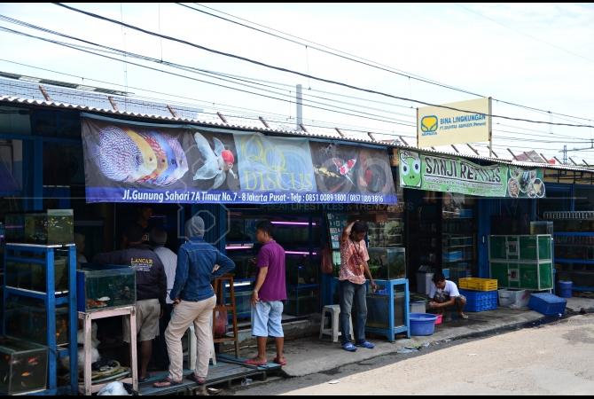 Lokasi tempat berjualan ikan hias di Jl. Gunung Sahari 7A Timur, Jakarta Pusat