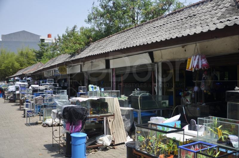 Pasar Ikan Hias Jalan Radin Inten Jakarta Timur