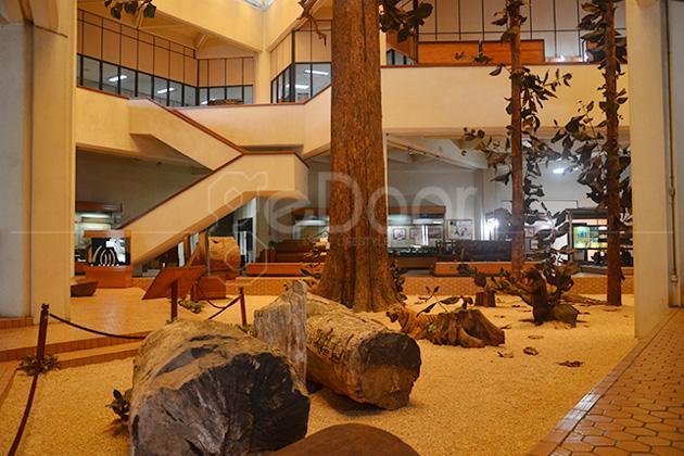 Museum Kehutanan Dan Taman Hutan Manggala Wanabakti Mengenal Lebih Jauh Hutan Di Indonesia