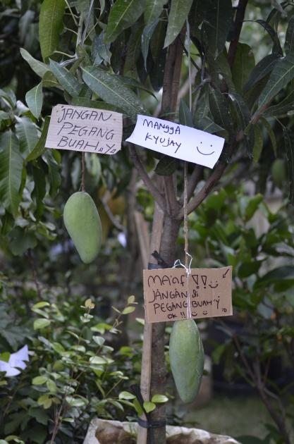 Pameran Tanaman Hias Di Jakarta 2014