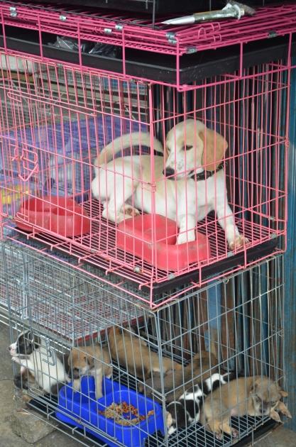 Cari Hewan Peliharaan Jalan Barito