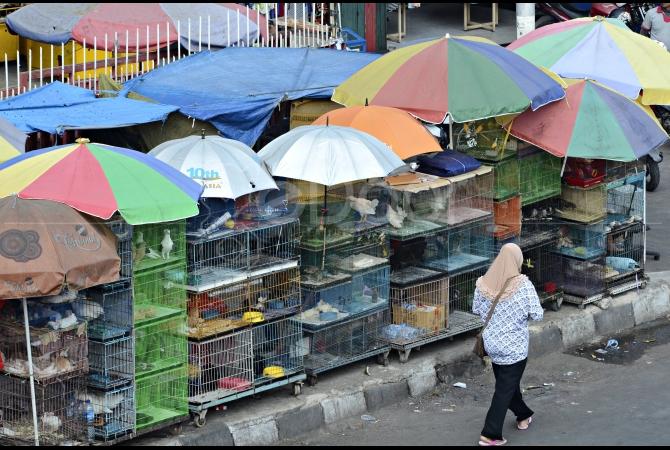 Berbagai Jenis Burung Ada Di Pasar Burung Jatinegara