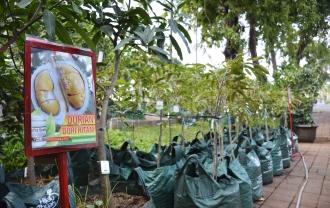 Banjir Durian Di Florina 2016