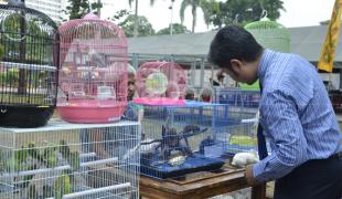 Berburu Hewan Peliharaan Di Flona 2014