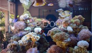 Sentra Ikan Hias Cengkareng Dari Mas Koki Hingga Arwana Ada Di Sini