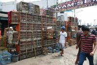 Pasar Burung Jatinegara
